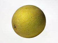 Galia Melone